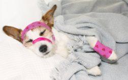 seguro de mascotas